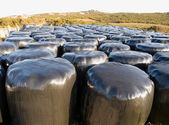 Many wrapped hay bales — Stock Photo