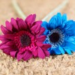 Two fabric flowers of different colors — Stock Photo