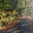 Tiled trail in the forest — Stock Photo