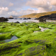 Seascape with algae in the foreground. — Stock Photo