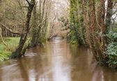 Jubia řeka v galicii, španělsko. — Stock fotografie