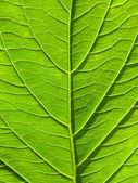Green leaf abstract background in vertical composition — Stock Photo