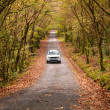 Car on a road in the forest — Stock Photo