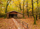 House in the forest in autumn — Stock Photo