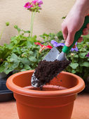 Preparing a pot for transplanting a plant  — Foto Stock