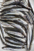 Raw anchovies in a white dish — Stock Photo
