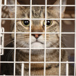 Cat in a cage — Stock Photo #18004211