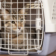 Stock Photo: Cat in cage