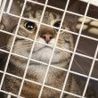 Foto Stock: Cat in cage