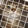 Cat in cage — Stockfoto #18004235