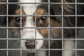 Dog in a cage — Stock Photo