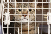 Cat in a cage — Stock Photo