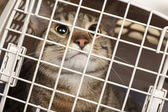 Cat in a cage — Foto Stock