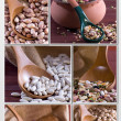 Legumes - Collage - Stock Photo
