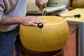Cutting a wheel of an italian cheese — Stock Photo