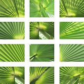 Palm and coconut leaves textures — Stock Photo