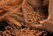 Seeds and ears of cereal — Stock Photo