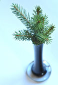 Fir in the vase — Stock Photo