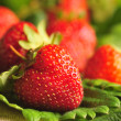 Strawberries on the green leaves — Stock Photo #18701279