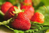Strawberries on the green leaves — Stock Photo