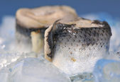 Rolled herring fillet — Stock Photo
