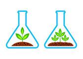 Laboratuvar cam bitki — Stok Vektör