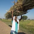 Indian teen carrying reeds on the head. — Stock Photo