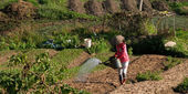 Asian gardener watering. — Stock Photo