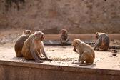Monkey's Family — Stock Photo