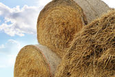 Straw roll bales — Stock Photo