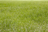Beautiful green grass texture — Stock Photo