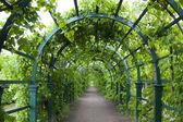 Green gate — Stock Photo