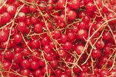 Fresh ripe redcurrant — Stock Photo