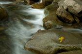 Mountain river close up — Stock Photo