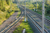 Railroad tracks in forest horizontal view — Stock Photo