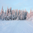 Winter snowy road in forest — Stock Photo