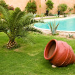 Lawn with palm and red pot near pool — Stockfoto