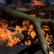 Tree branches burning in brazier — Stock Photo