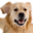 Square pixels image of a dog — Stock Photo