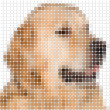 Dog pixel image with square rounded pixels — Stock Photo