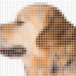 Square rounded pixel image of dog — Stock Photo