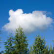 Cloud like a running dog — Stock Photo