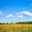 Panorama of clouds and meadow — Stock Photo