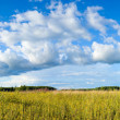 Panoramic view of clouds and meadow — Stock Photo #30127901
