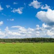 Panoramic view of field with haystacks — Stock Photo