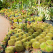 Cacti and tropical plants on road — Stock Photo