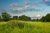 Green evening meadow with flowers — Stock Photo