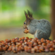 Photo of squirell eating nut - Stock Photo