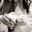 Pigeons in the hands of the married — Stock Photo