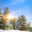 Stock Photo: Winter landscape. Composition of nature.